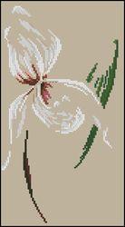 Воздушная орхидея-DMC