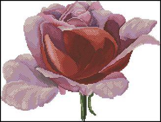 Цветущая роза-DMC