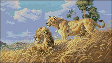 Африканские львы-Dimensions