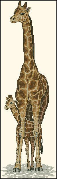Жирафы-Dimensions