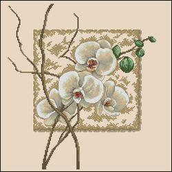 Восточная орхидея-Dimensions