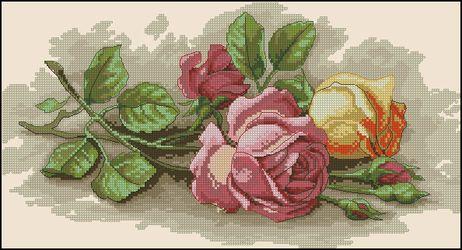 Срезанные розы-Dimensions