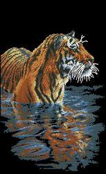 Тигриное отражение-Dimensions
