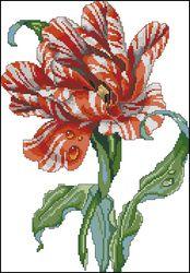 Полосатый тюльпан-Janlynn