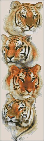 Семья тигров-Janlynn