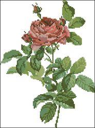 Дикая роза-Lanarte