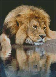 Лев около воды