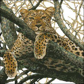 Риолис-Леопард