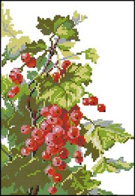 Риолис-Красная смородина